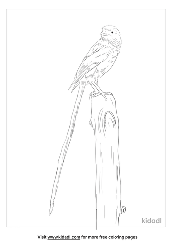 magpie-shrike-coloring-page