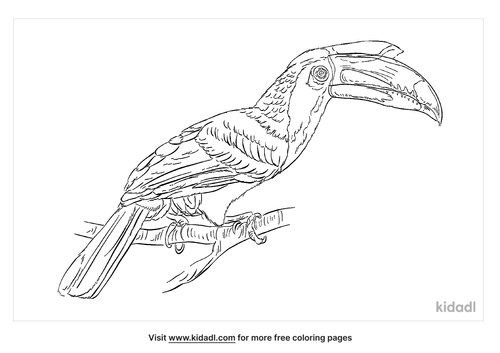 malabar-pied-hornbill-coloring-page