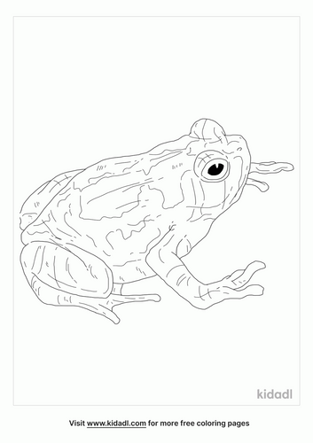 malagasy-rainbow-frog-coloring-page