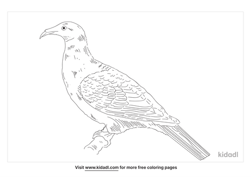 marquesan-imperial-pigeon-coloring-page