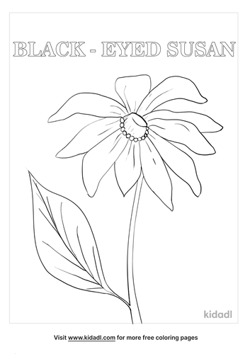 maryland state flower coloring page_lg.png