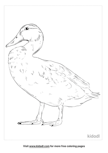 masked-duck-coloring-page