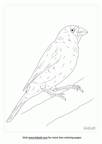 masked-finch-coloring-page