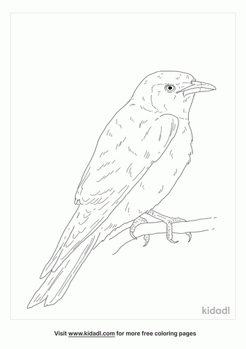 masked-woodswallow-coloring-page