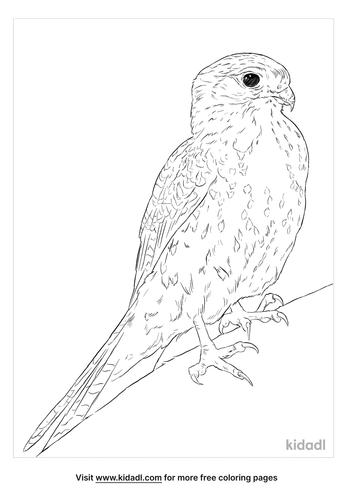 mauritius-kestrel-coloring-page