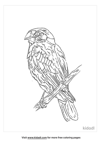 medium-ground-finch-coloring-page