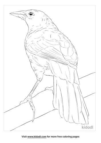 melodious-blackbird-coloring-page