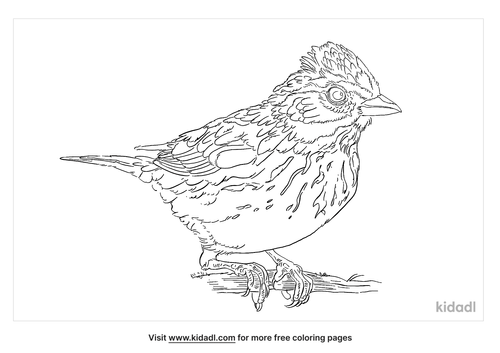 mexican-chickadee-coloring-page