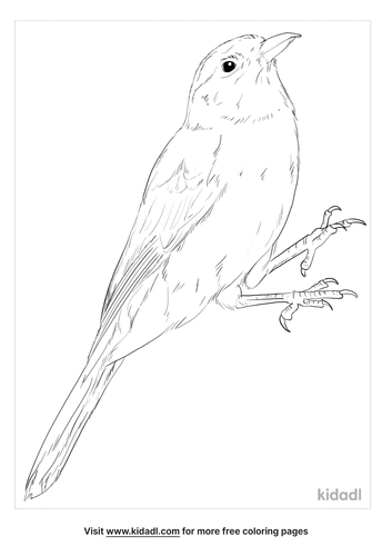 mexican-jay-coloring-page