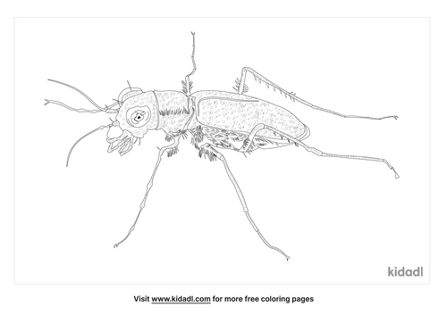 miami-tiger-beetle-coloring-page