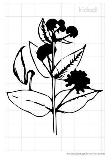 milkweed-flower-stencil