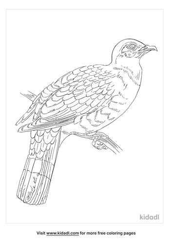 mindoro-imperial-pigeon-coloring-page