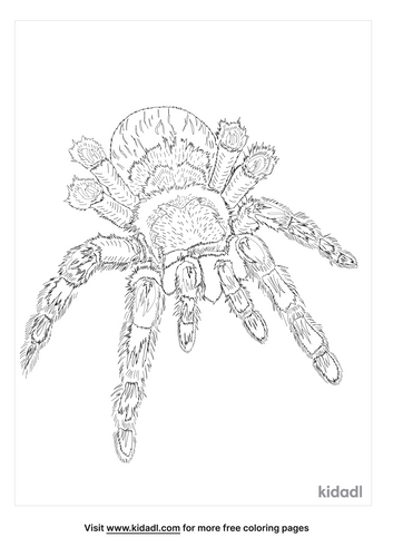 money-spider-coloring-page