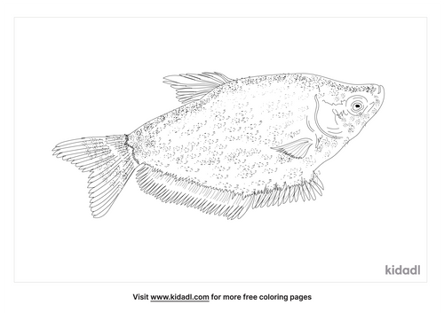 moonlight-gourami-coloring-page