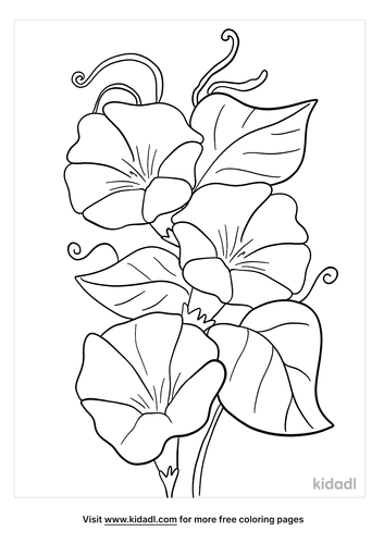 morning glory coloring page-lg.png