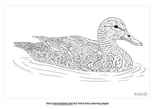 mottled-duck-coloring-page