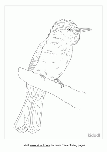 mountain-bulbul-coloring-page