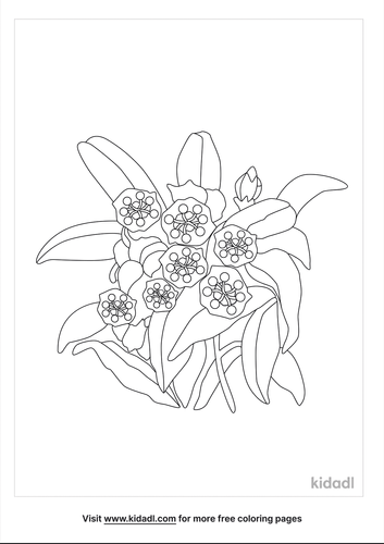 mountain-laurel-coloring-page.png