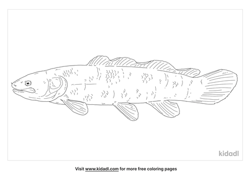 mudfish-coloring-page