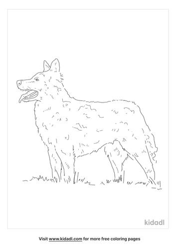 mudi-coloring-page