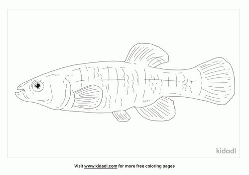 mummichog-coloring-page