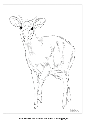 muntjac-coloring-page