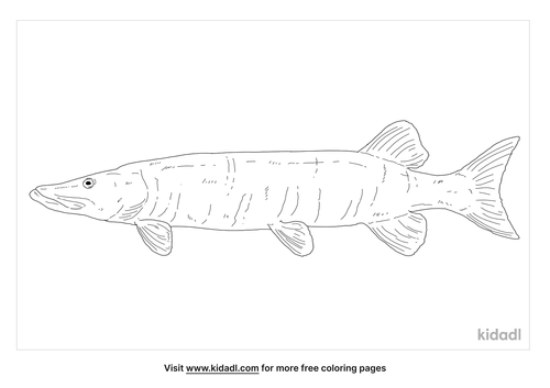 muskellunge-coloring-page
