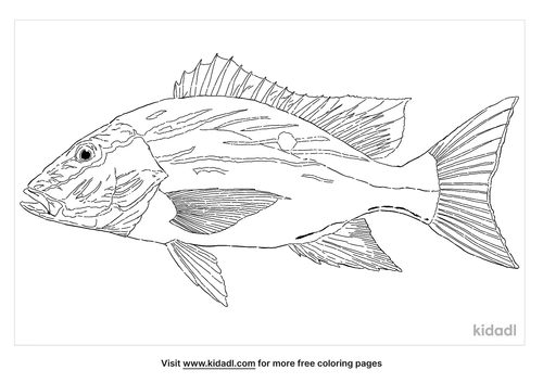 mutton-snapper-coloring-page