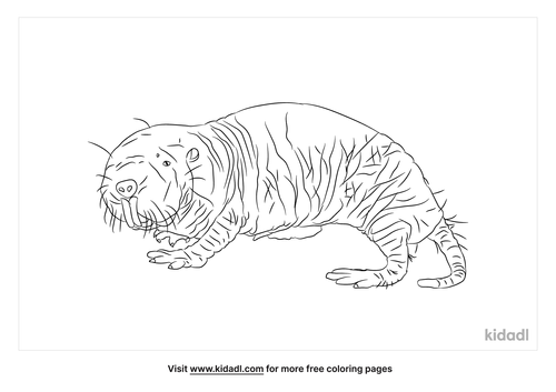 naked-mole-rat-coloring-page