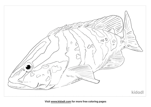 nassau-grouper-coloring-page