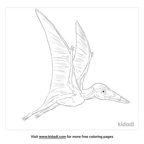 nemicolopterus-coloring-page