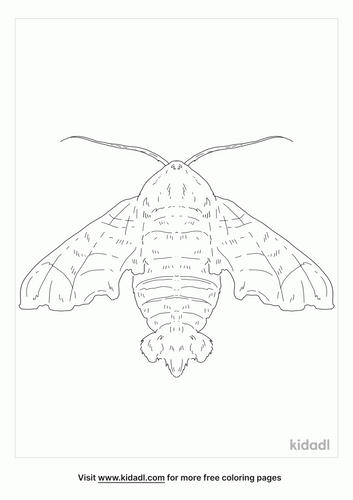 nessus-sphinx-coloring-page