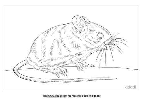 new-holland-mouse-coloring-page