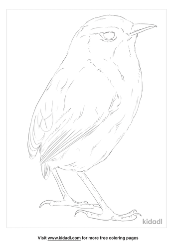 new-zealand-rock-wren-coloring-page