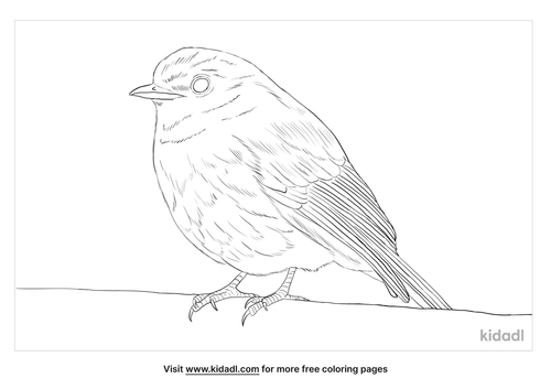 nilgiri-flycatcher-coloring-page