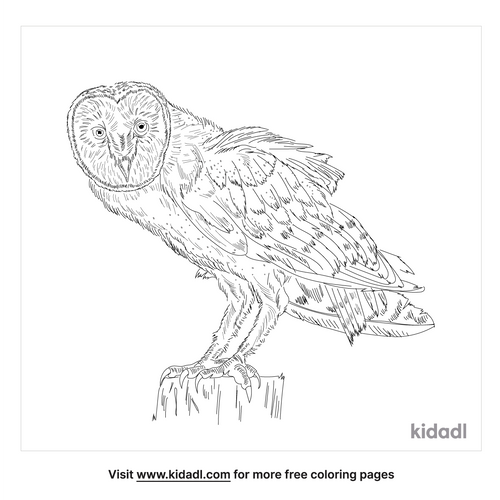 north-american-barn-owl-coloring-page