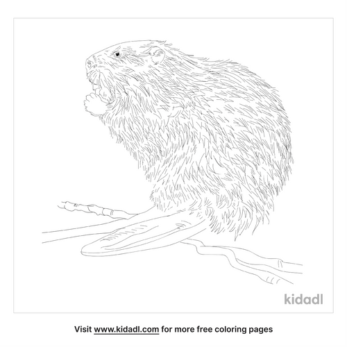 north-american-beaver-coloring-page
