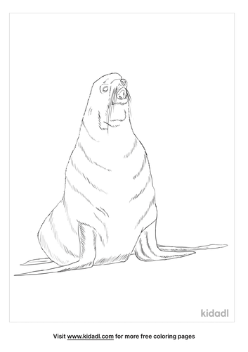 northern-fur-seal-coloring-page