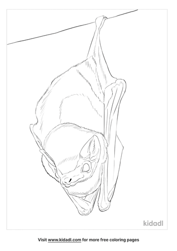 northern-ghost-bat-coloring-page