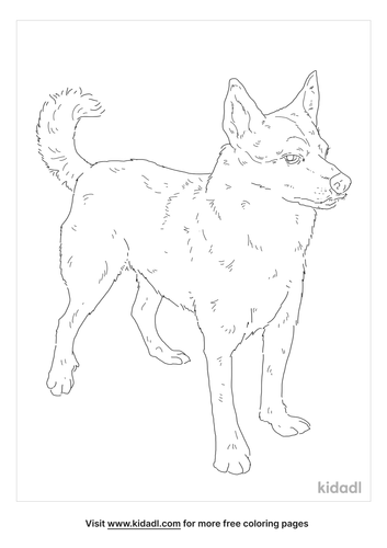 norwegian-lundehund-coloring-page