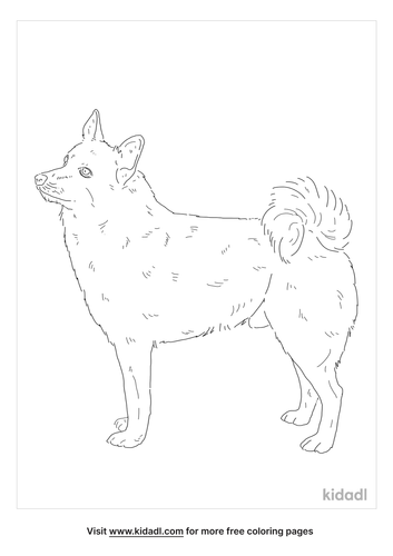 norweigan-buhund-coloring-page