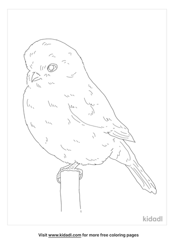 norwich-canary-coloring-page