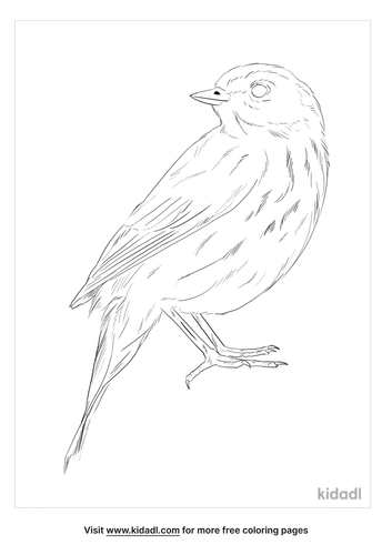 olive-backed-pipit-coloring-page