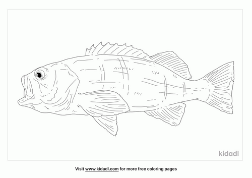 olive-rock-fish-coloring-page