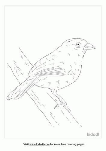 olive-sparrow-coloring-page