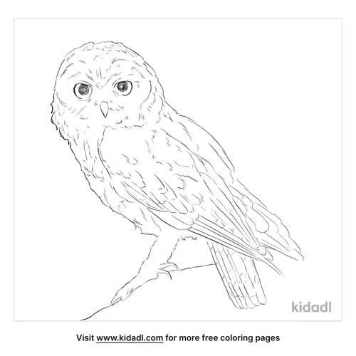 omani-owl-coloring-page