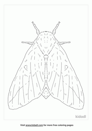 orange-tipped-oakworm-moth-coloring-page