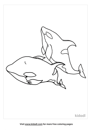 orca coloring page-5-lg.png