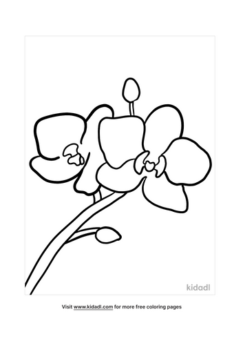 orchid drawing-2-lg.png
