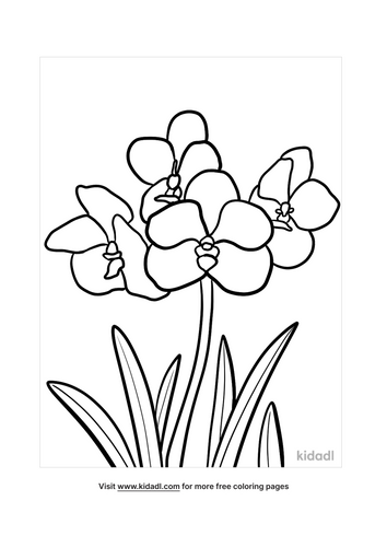 orchid drawing-3-lg.png